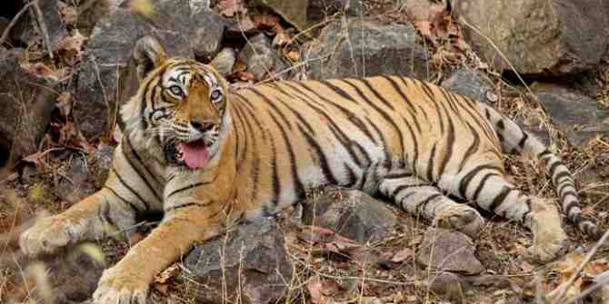 Return to Ranthambhore