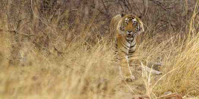 Kazakhstan to be the first country to reintroduce tigers into the wild