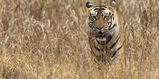 Forest guards in Assam to receive modern weapons to protect wildlife