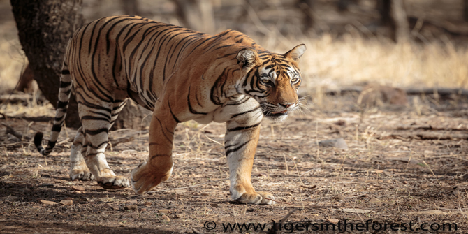Ranthambhore today
