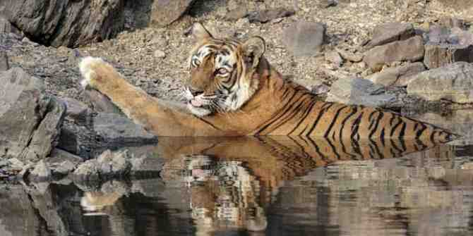An important tiger corridor in danger of being lost to mining.