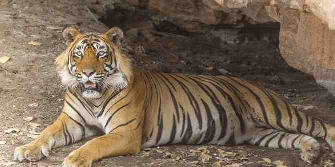 Please sign and support this petition to put right the injustice done to Ustad
