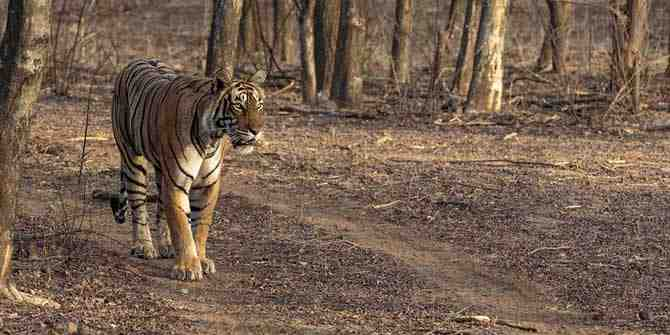 India and Nepal are co-operating on a joint tiger census