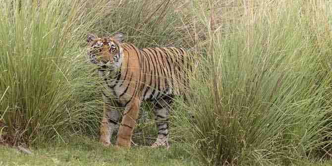 Indian tiger reserve to double in size.