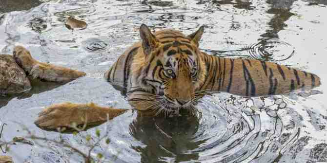 A potential 'nail in the coffin' for tigers and other wildlife at Corbett