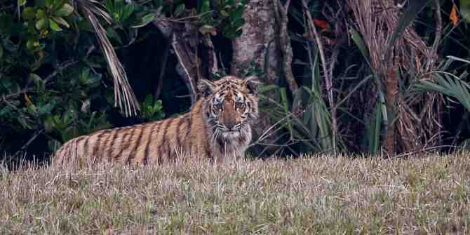 The Sunderbans and Kaziranga February/March 2014