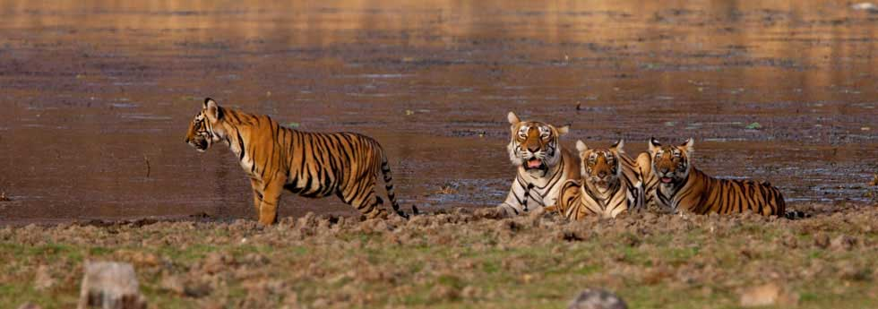 Machali & cubs at lake