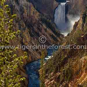 Scenes from Yellowstone and the Tetons