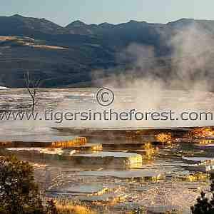 Scenes from Yellowstone and the Tetons.